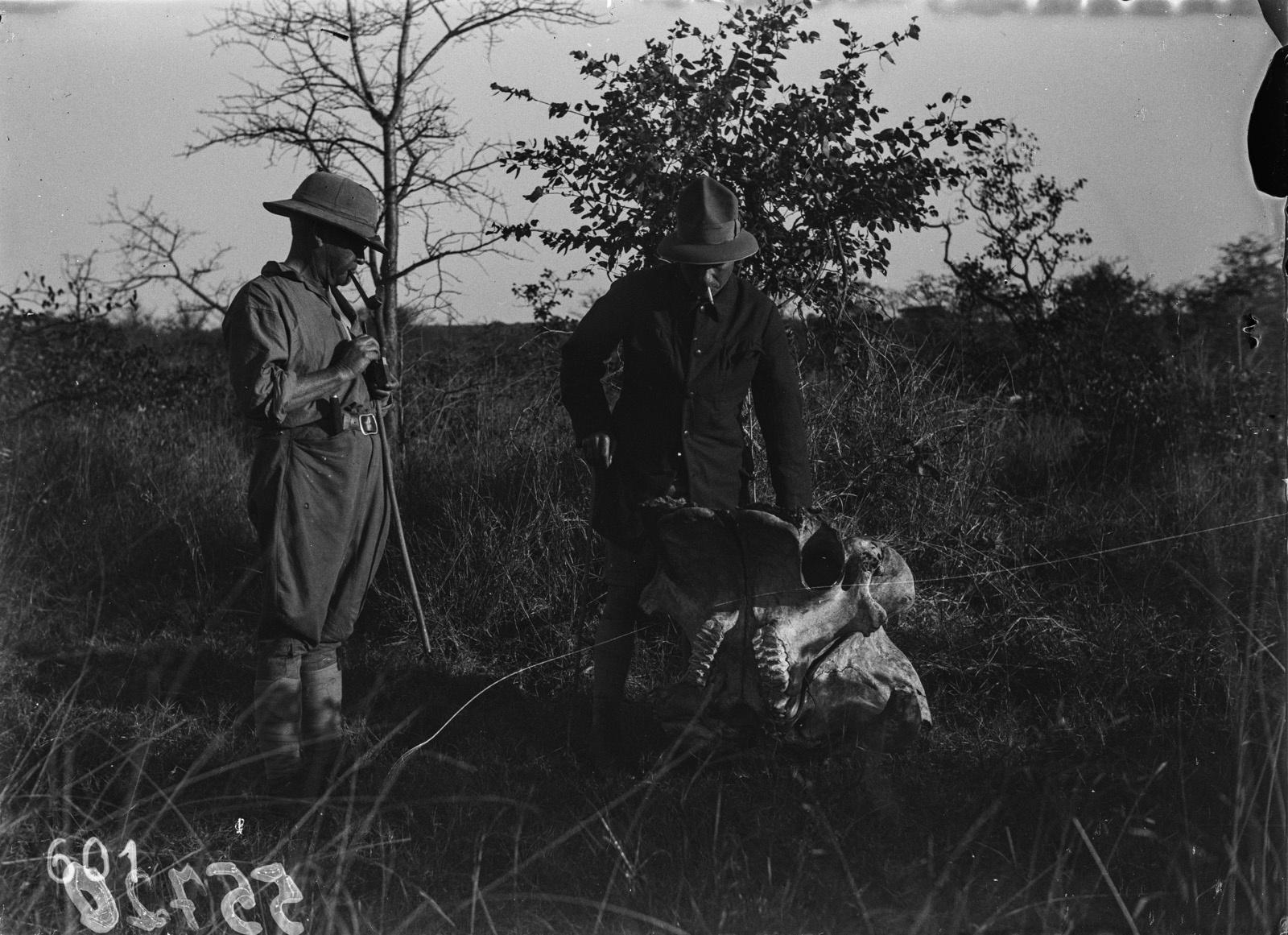 Национальный парк Крюгера. Участники экспедиции смотрят на череп слона. Бивни уже удалены
