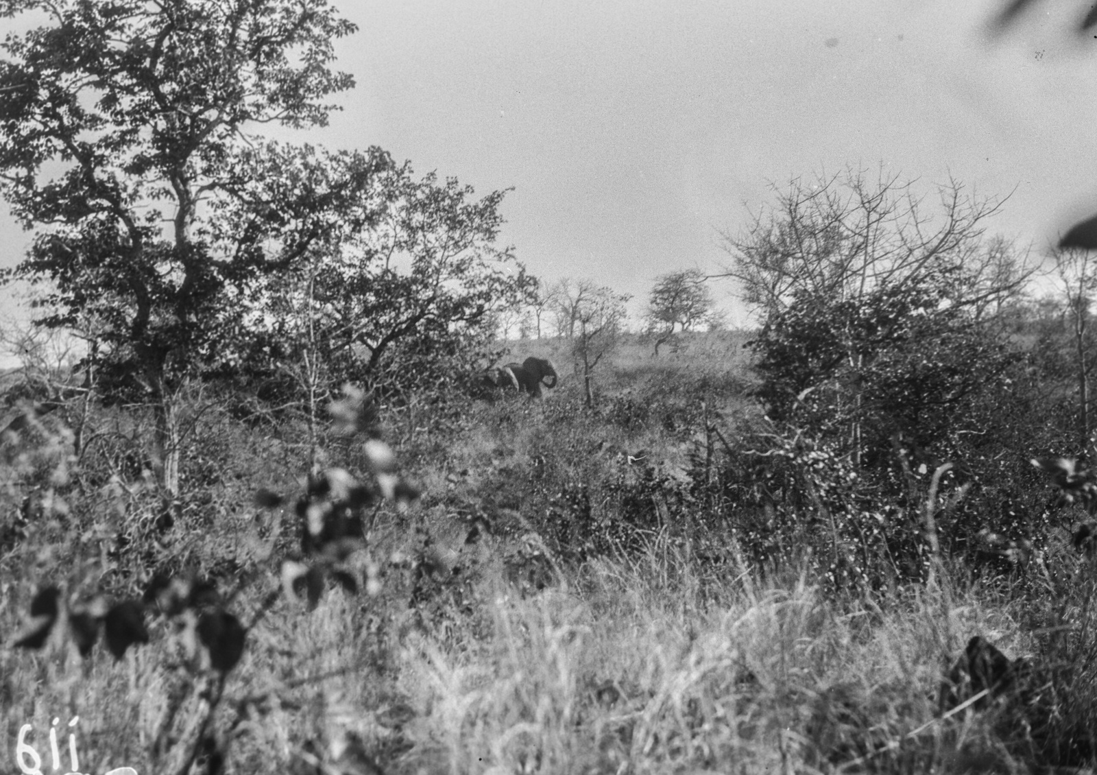 Национальный парк Крюгера. Слоны в национальном парке