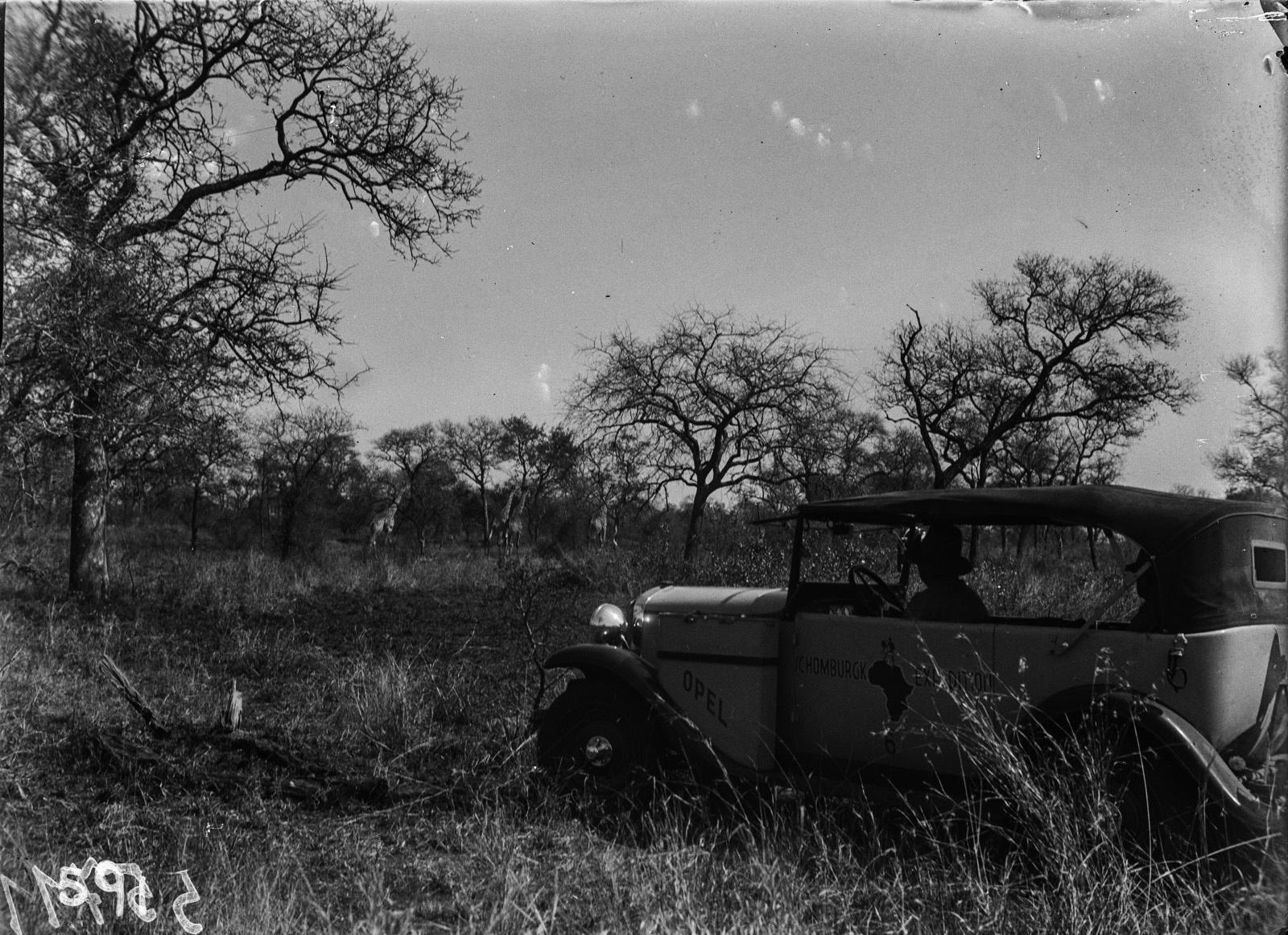 Национальный парк Крюгера. Автомобиль экспедиции и  жирафы на заднем плане