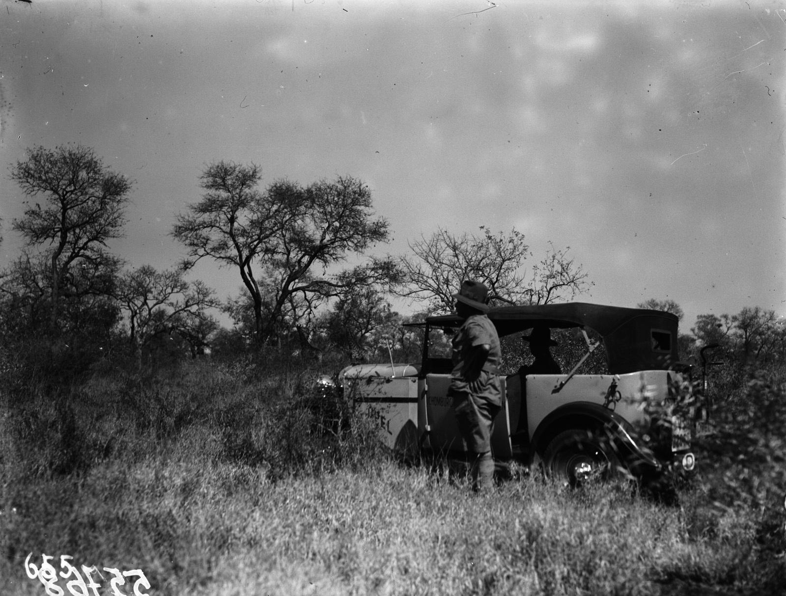 Национальный парк Крюгера. На переднем плане автомобиль экспедиции. На заднем плане группа жирафов
