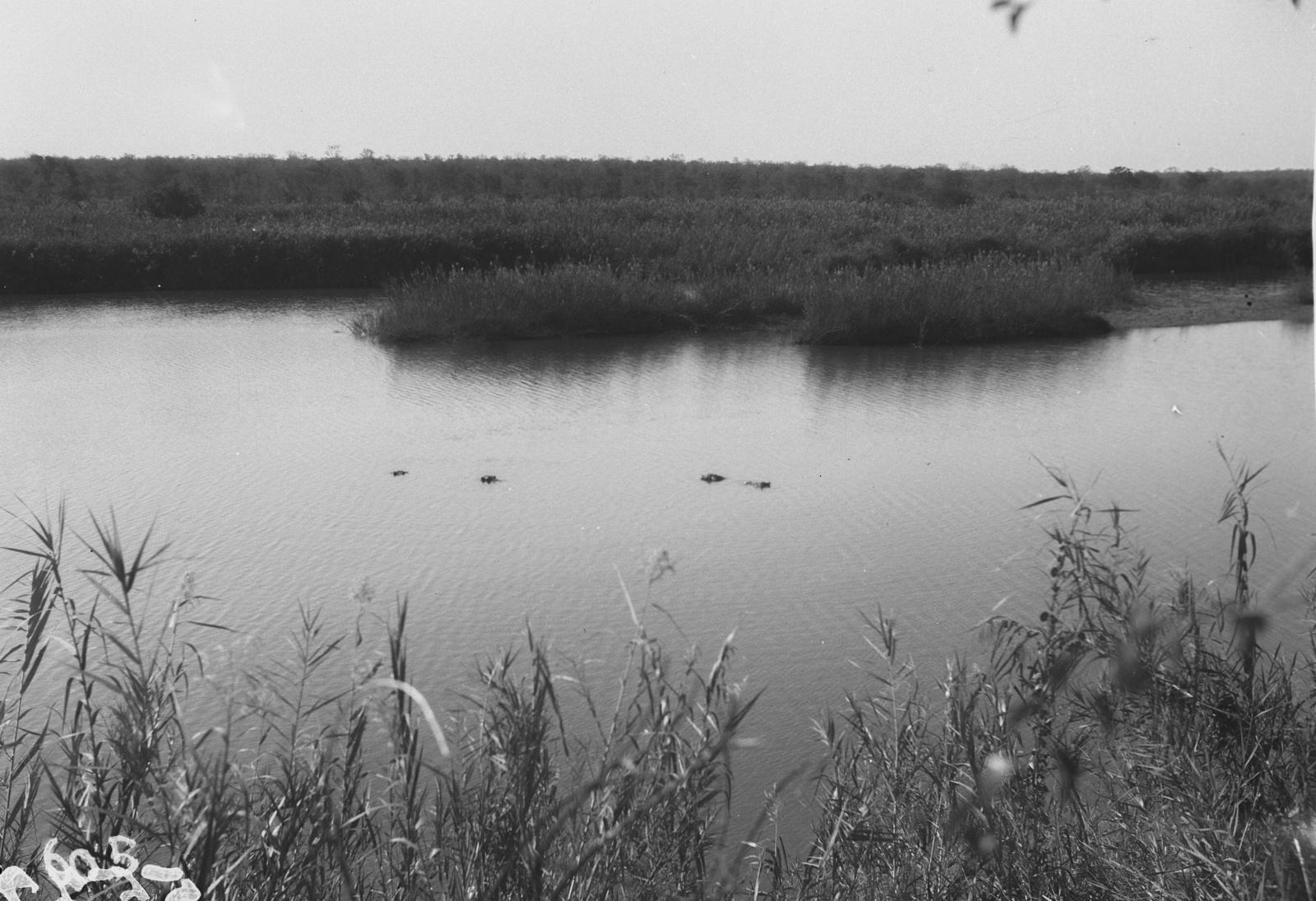 Национальный парк Крюгера.  Водоём
