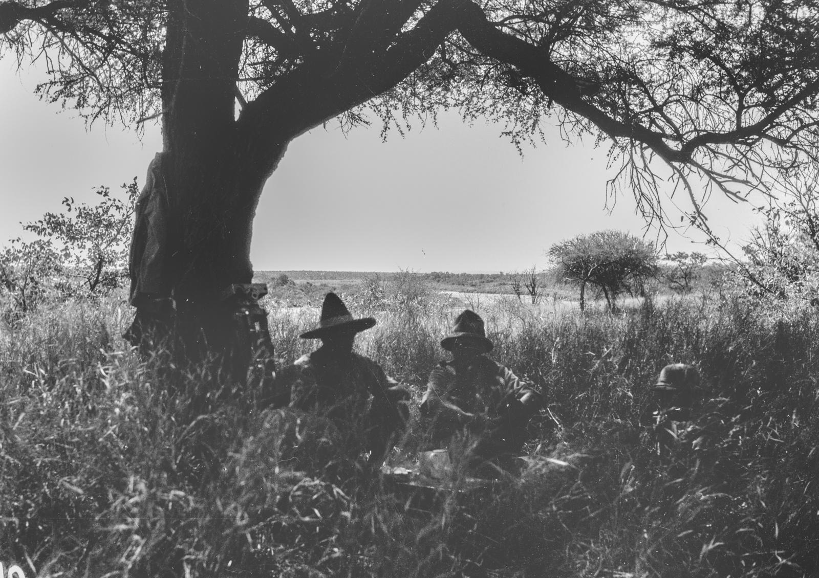 Национальный парк Крюгера. Привал в высокой траве