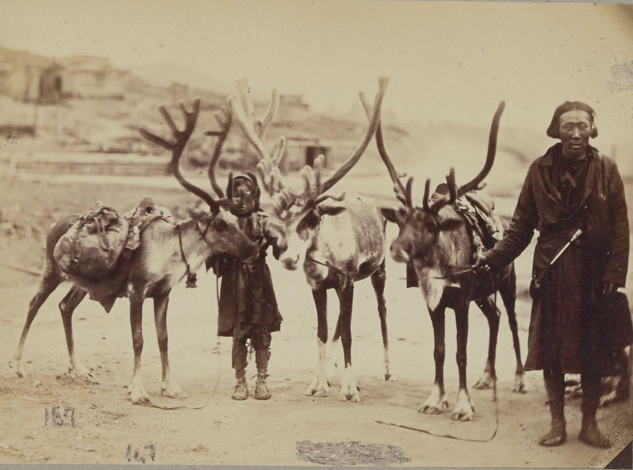 Тунгус с их северными оленями, золотые рудники Бутина