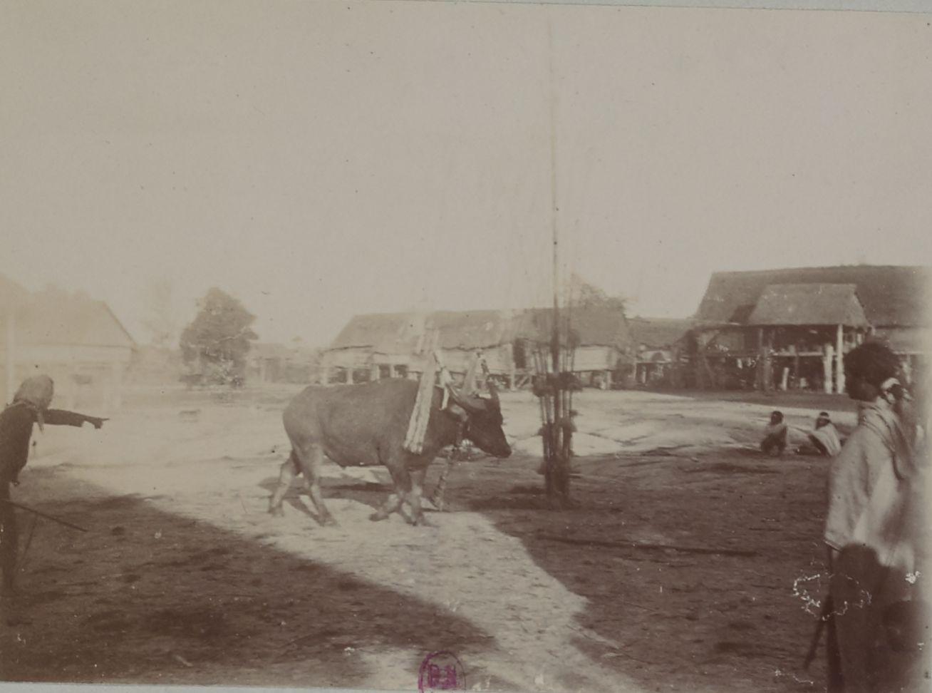 Бахнарский праздник буйволов