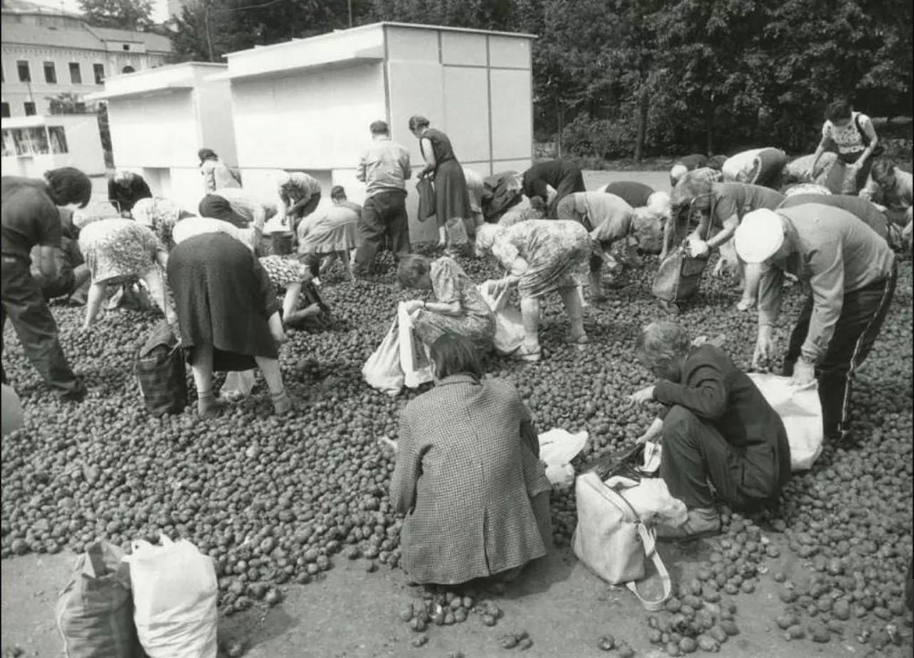 Бесплатная гнилая картошка