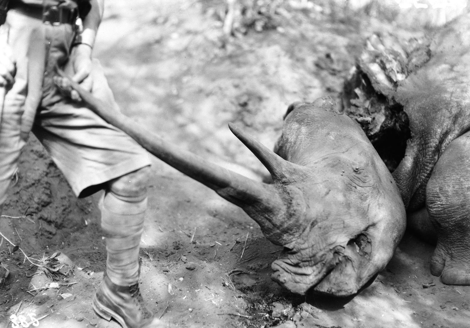 Квазулу-Наталь. Умфолози. Мертвый носорог