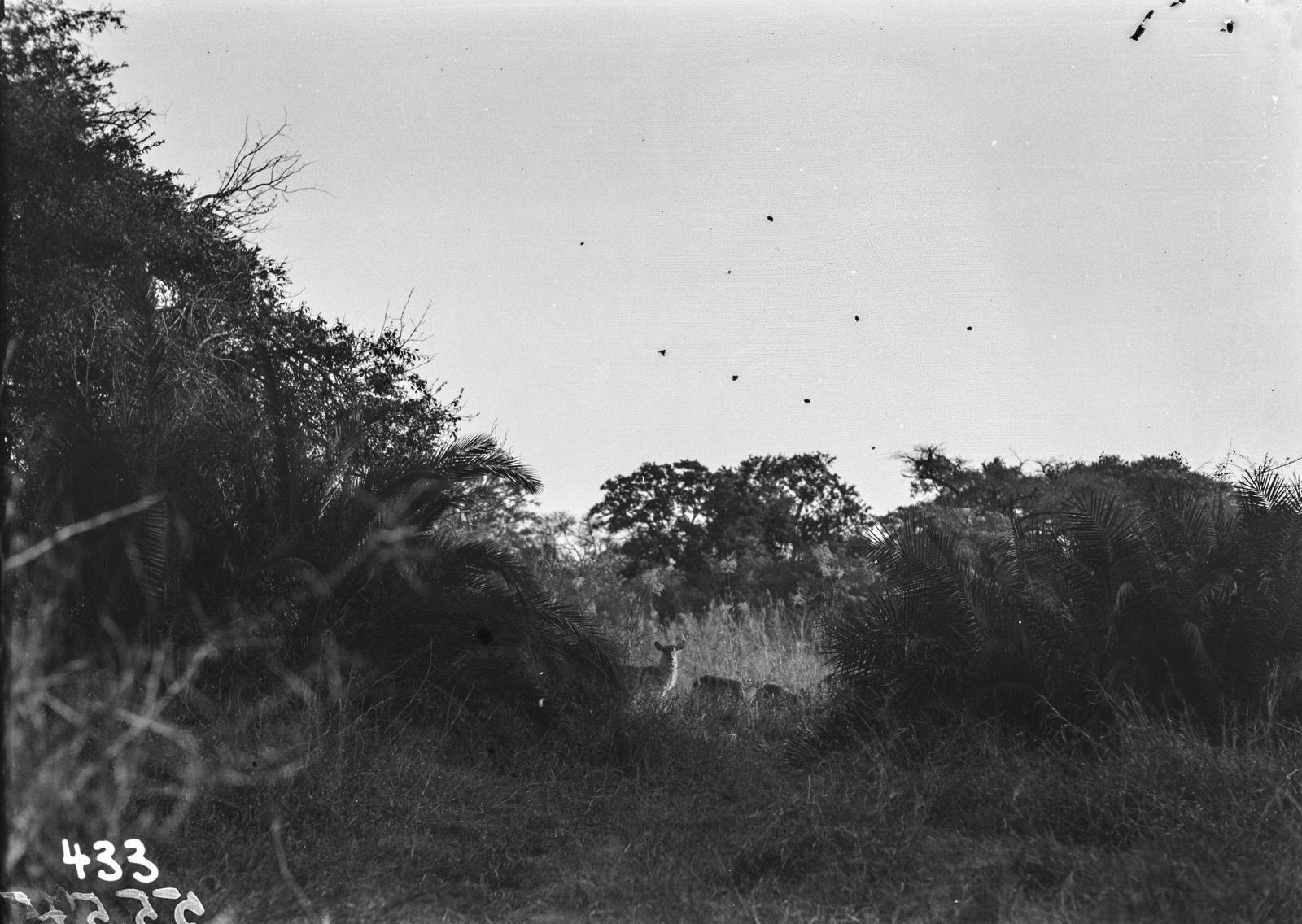 Малелан. Фотография дикой природы в саванне недалеко от города