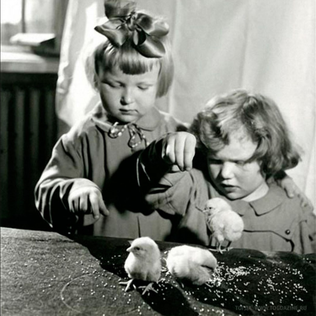 1950-е. Дети и цыплята