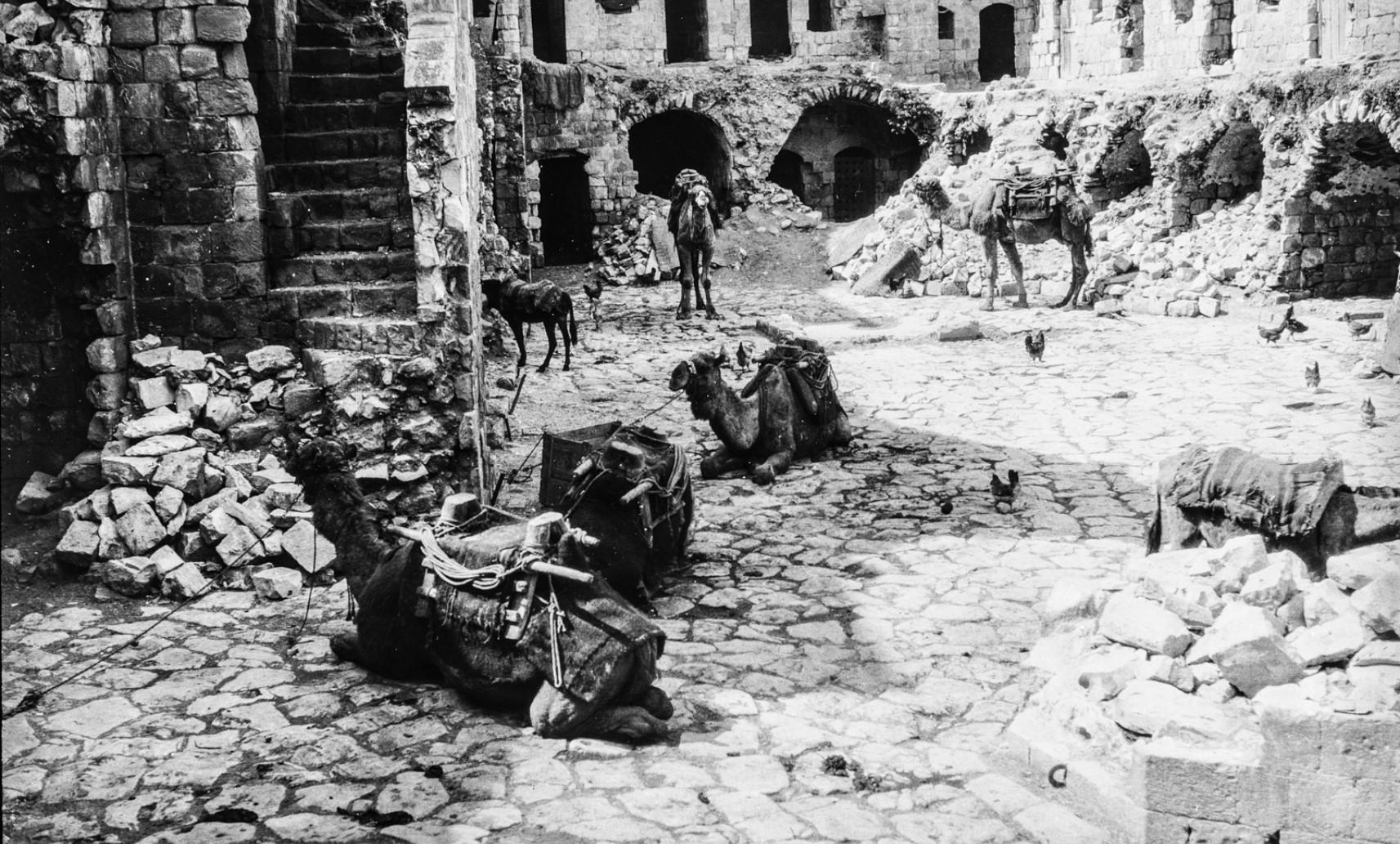 Верблюды среди руин.