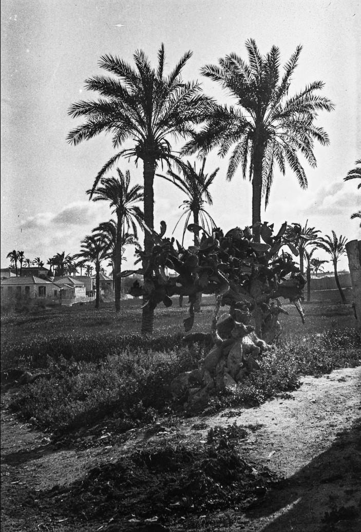 Яффо. Пейзаж с пальмами