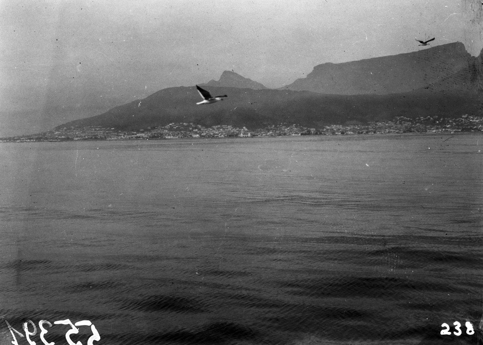 Южно-Африканский Союз. Порт-Элизабет. Чайки над морем