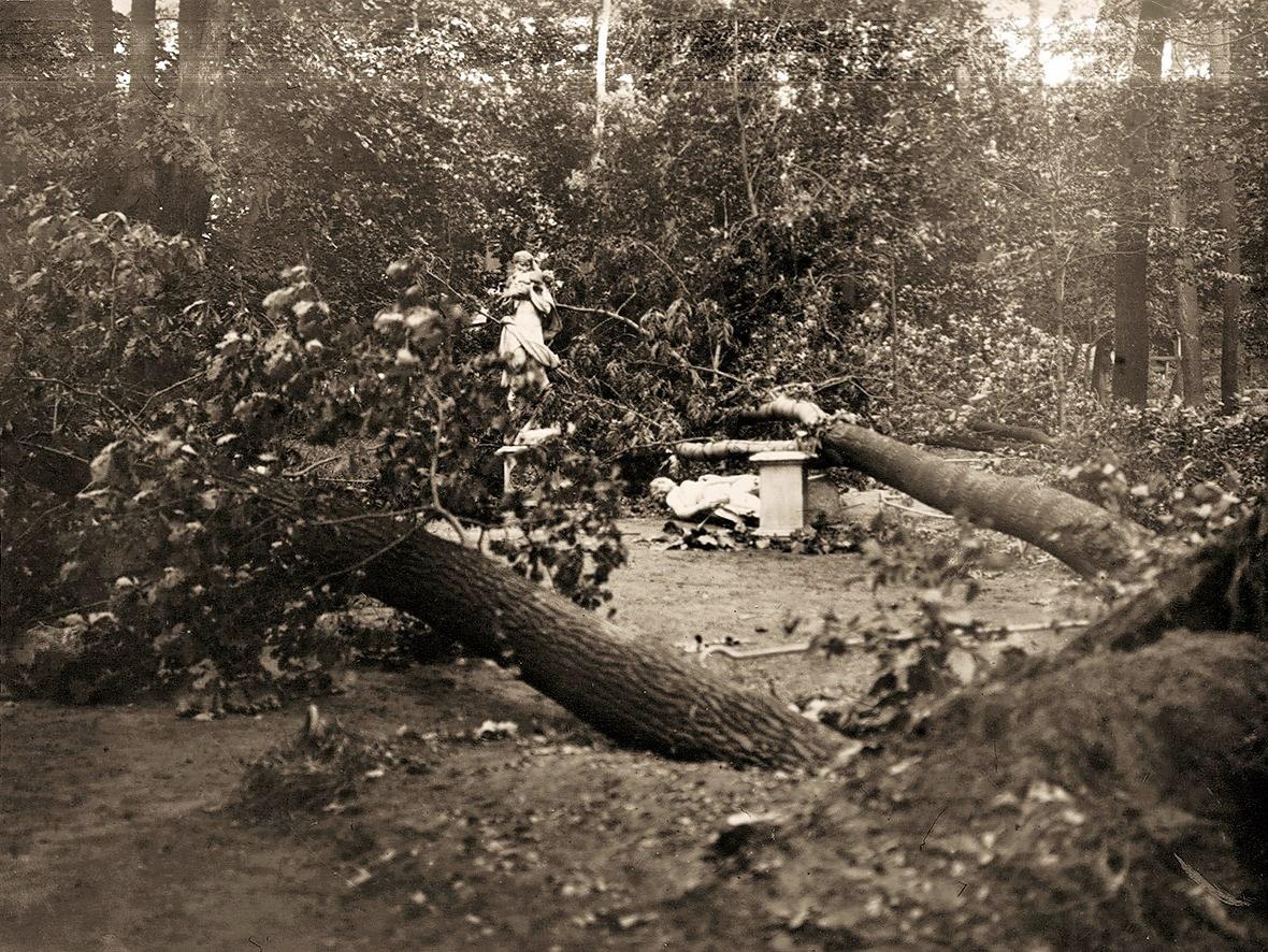 После наводнения в Летнем саду