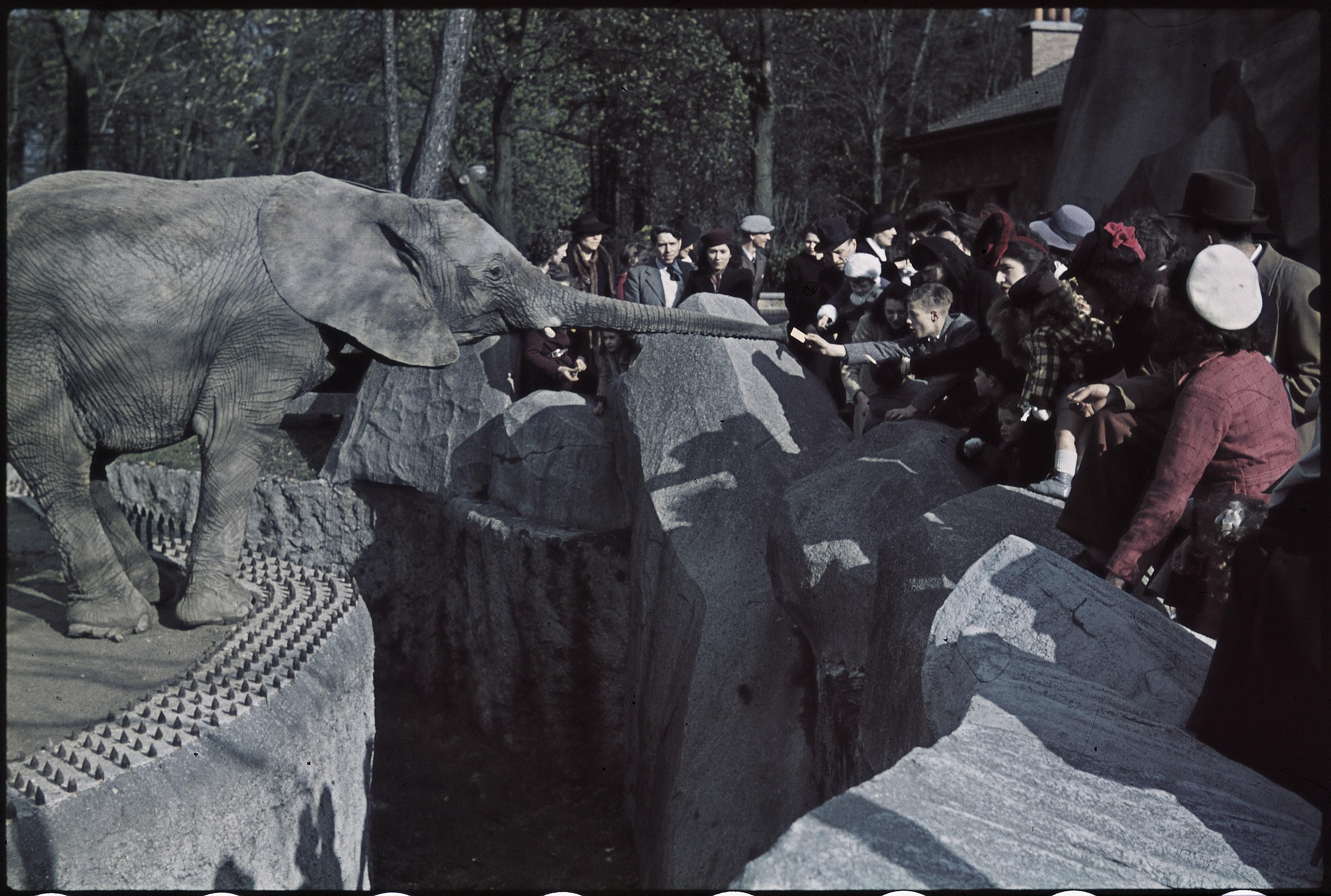 В зоопарке Винсена
