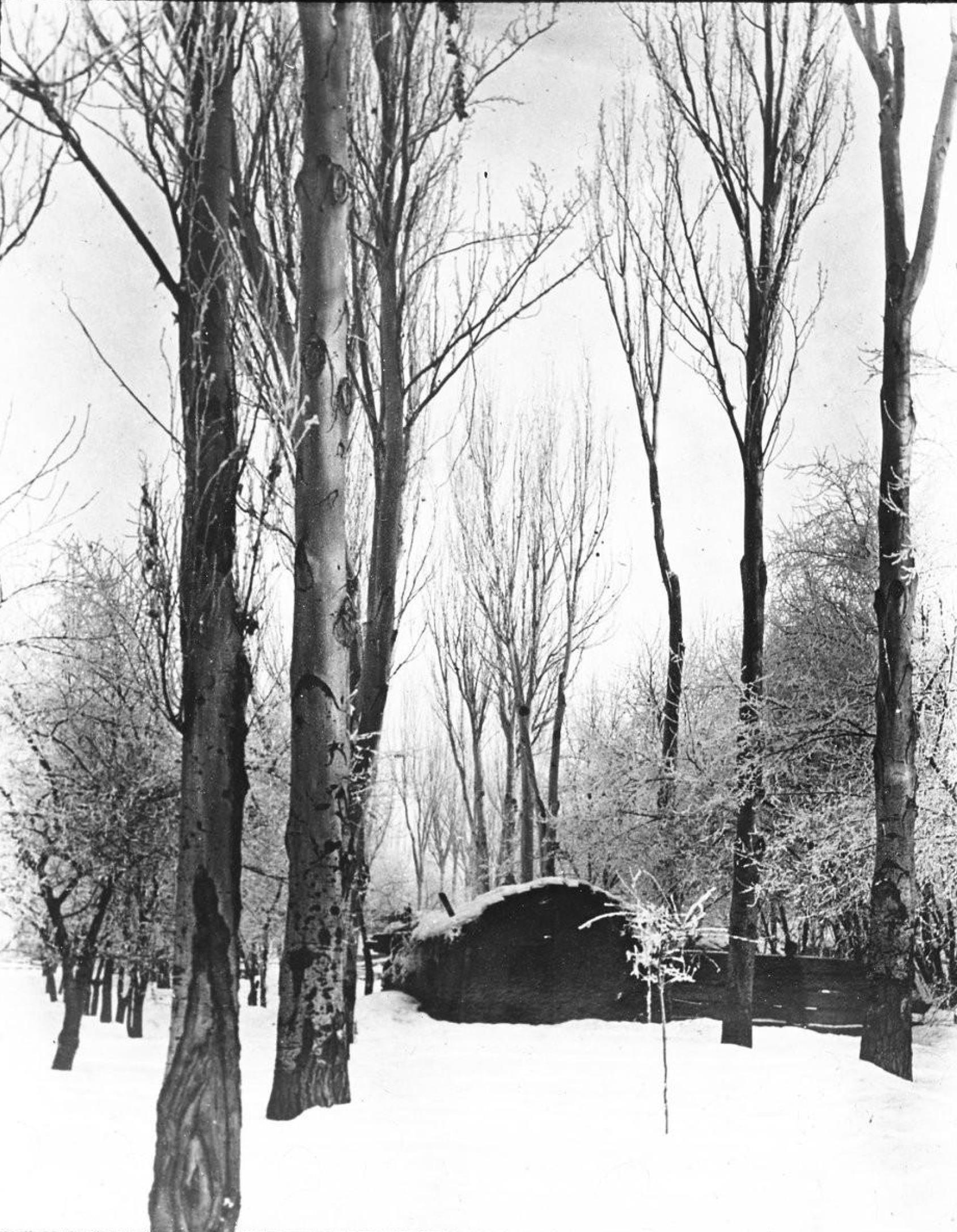 Снег под Самаркандом (18 января)