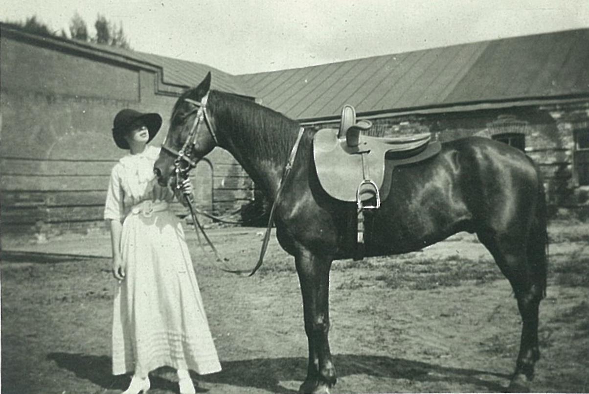 Лошадь Всеволожских около конюшни в Рябово