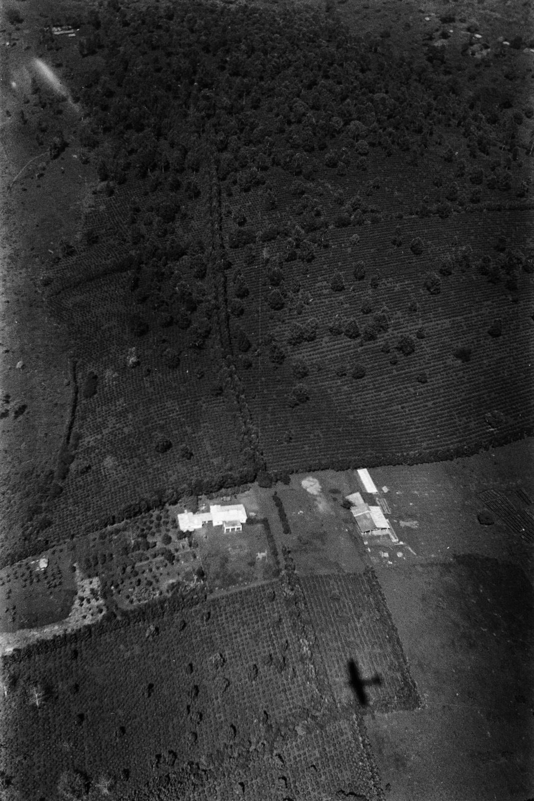 Танзания. Вид на плантацию