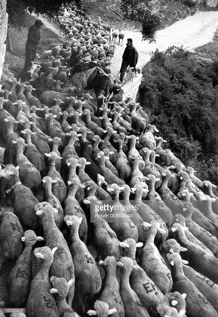 1958. Сезонный переход на летние пастбища в июле