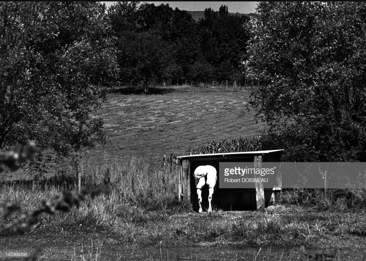 1972, Белый конь в сельской местности