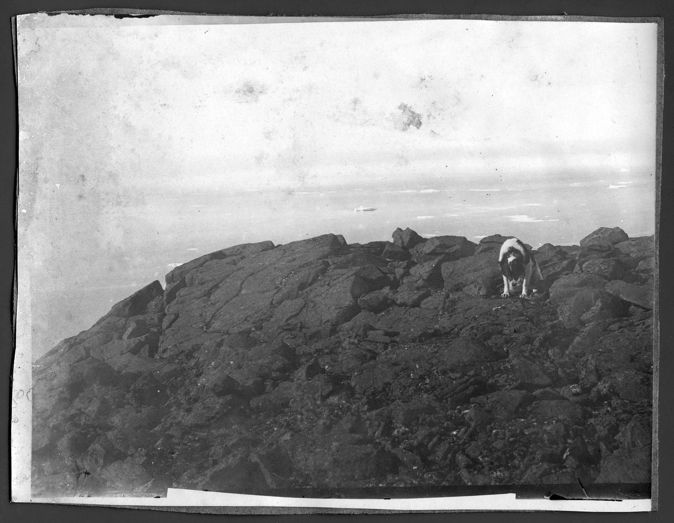 Собака на скале на фоне моря