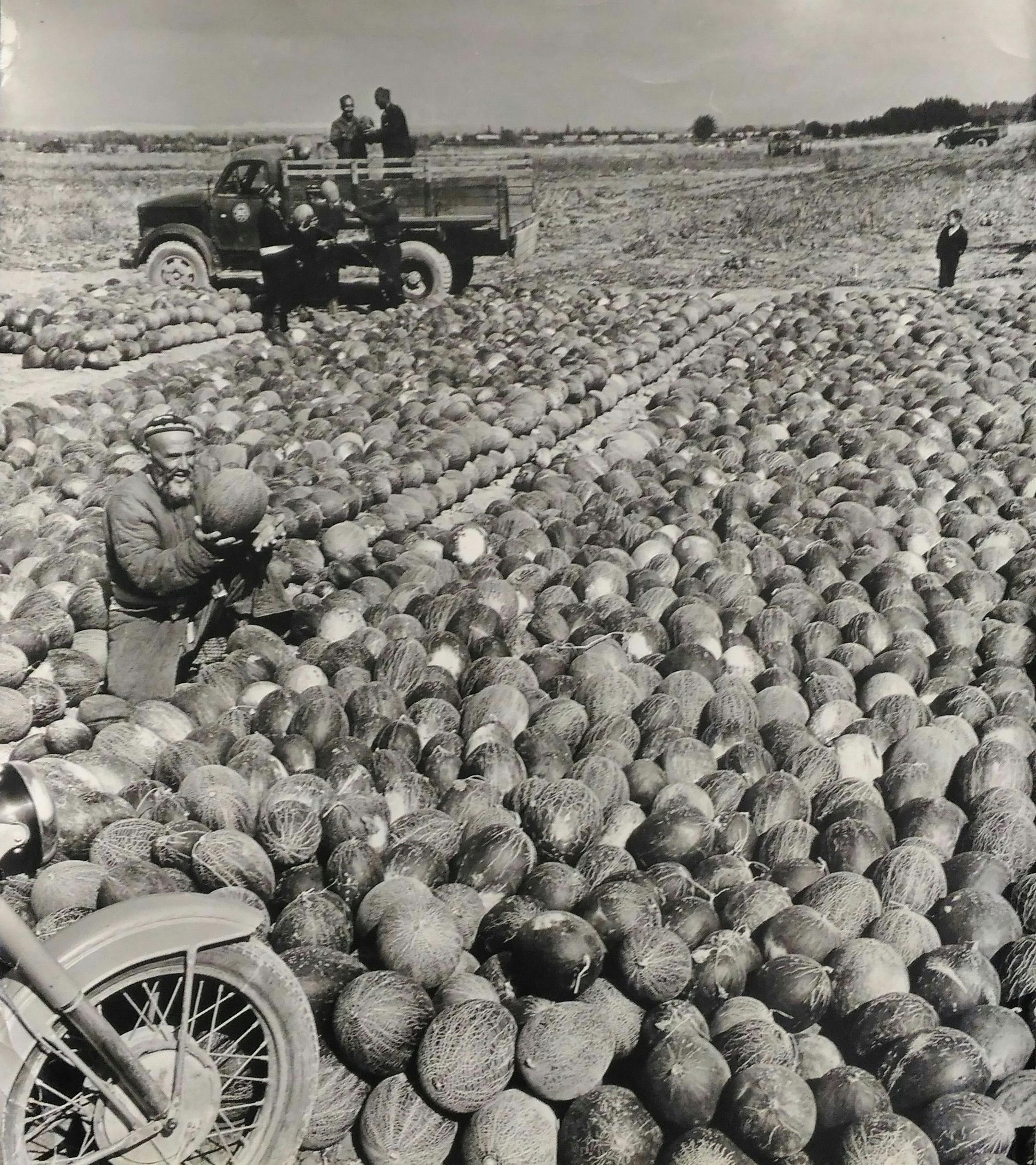 1950-е.  Зельма Г.А. «На бахче»