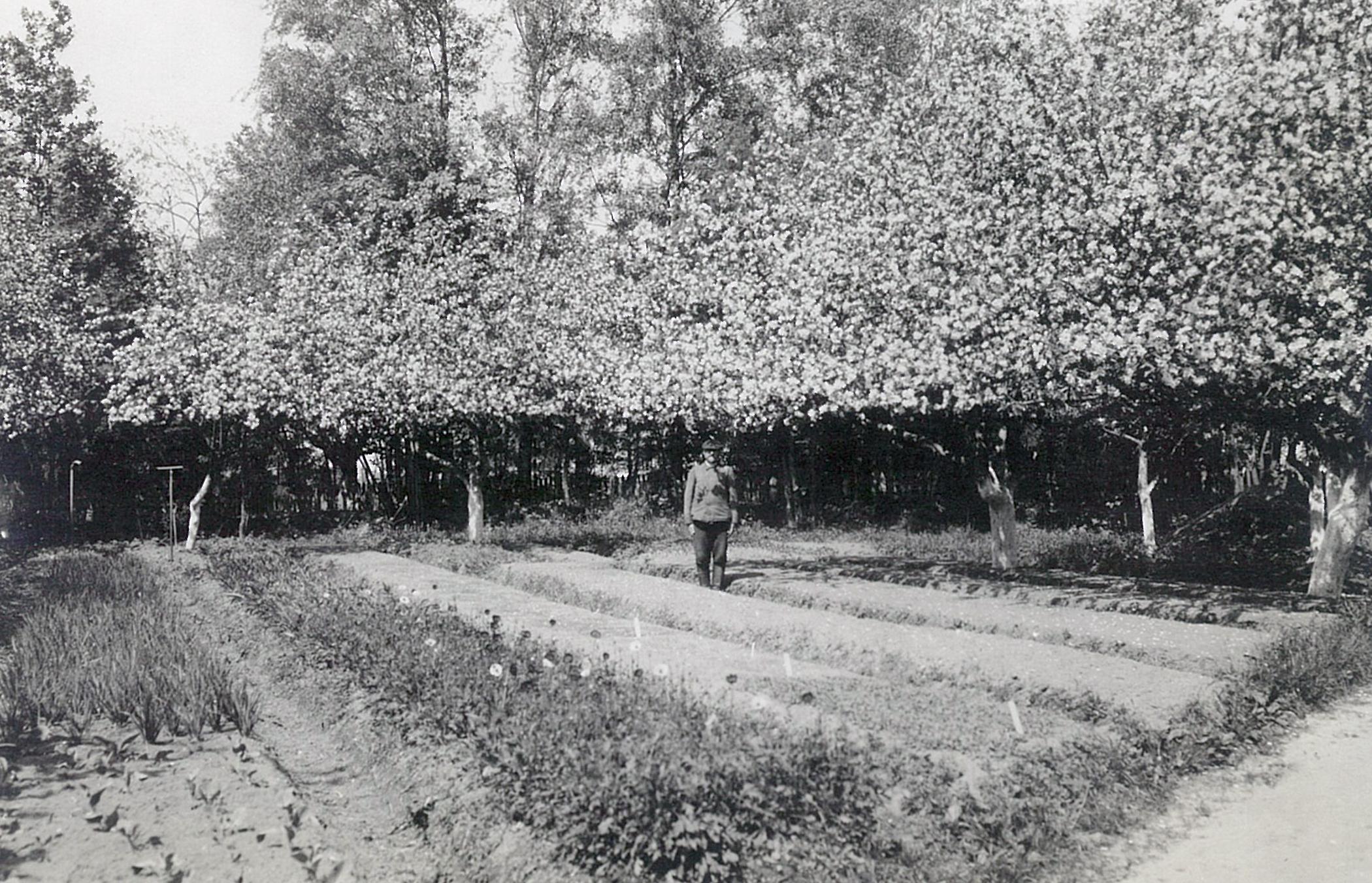 Цветущие деревья и грядки в парке