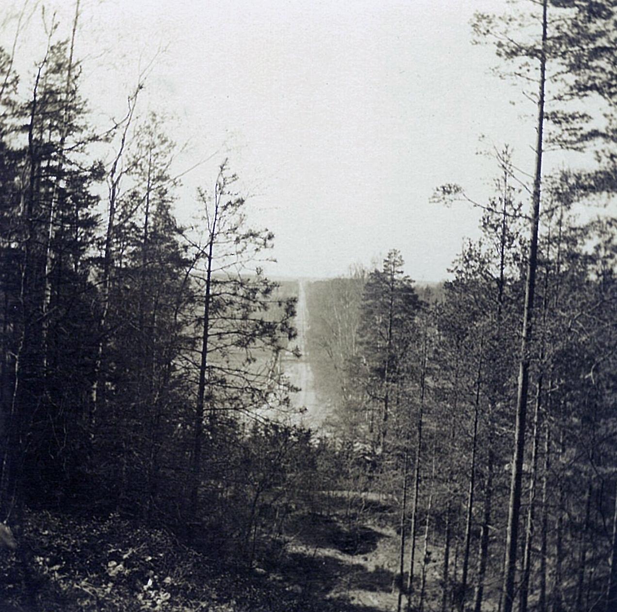 Вид из парка Рябово на Петербургское шоссе