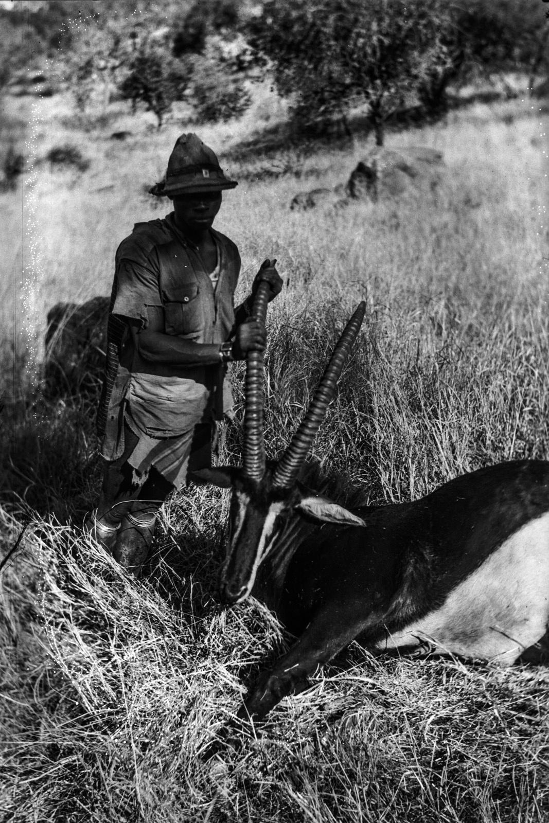 Северный Тули-Блок. Убитая саблевая антилопа