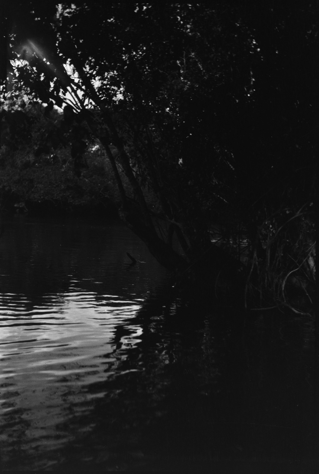 Между Лусвиши и Фунда. Чингола. Прибрежная растительность реки Лусвиши