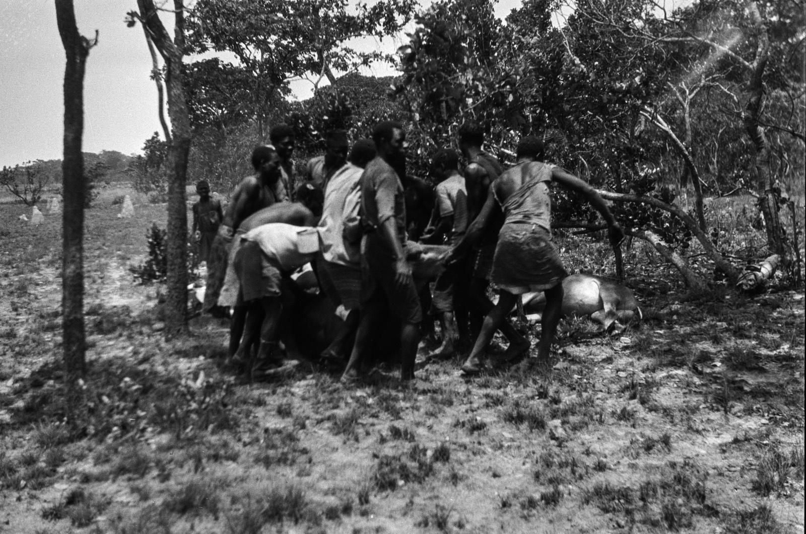 Касемпа. Мужчины несут убитую антилопу к краю дамбо