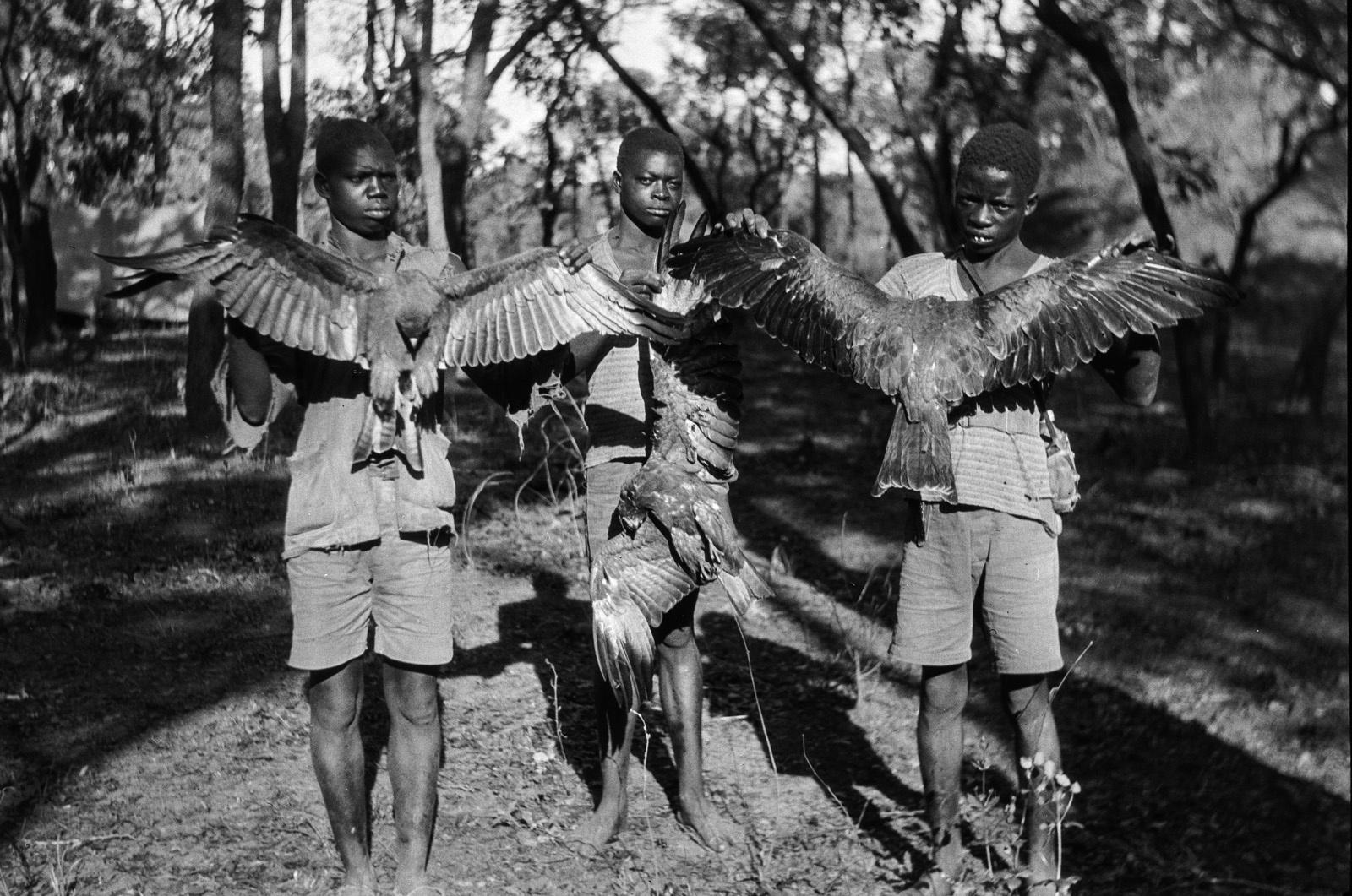 Касемпа. Три калвеноса показывают пойманных ястребов