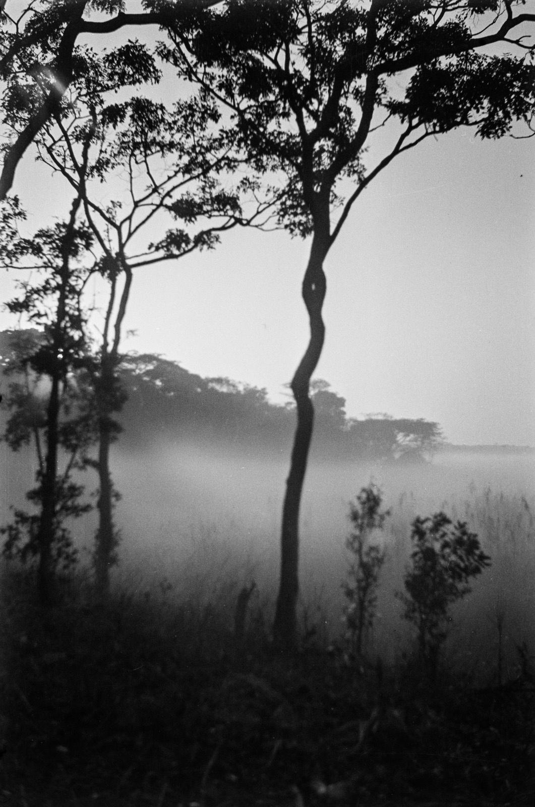 Касемпа. Утренний туман в пойме Мусонведзи.