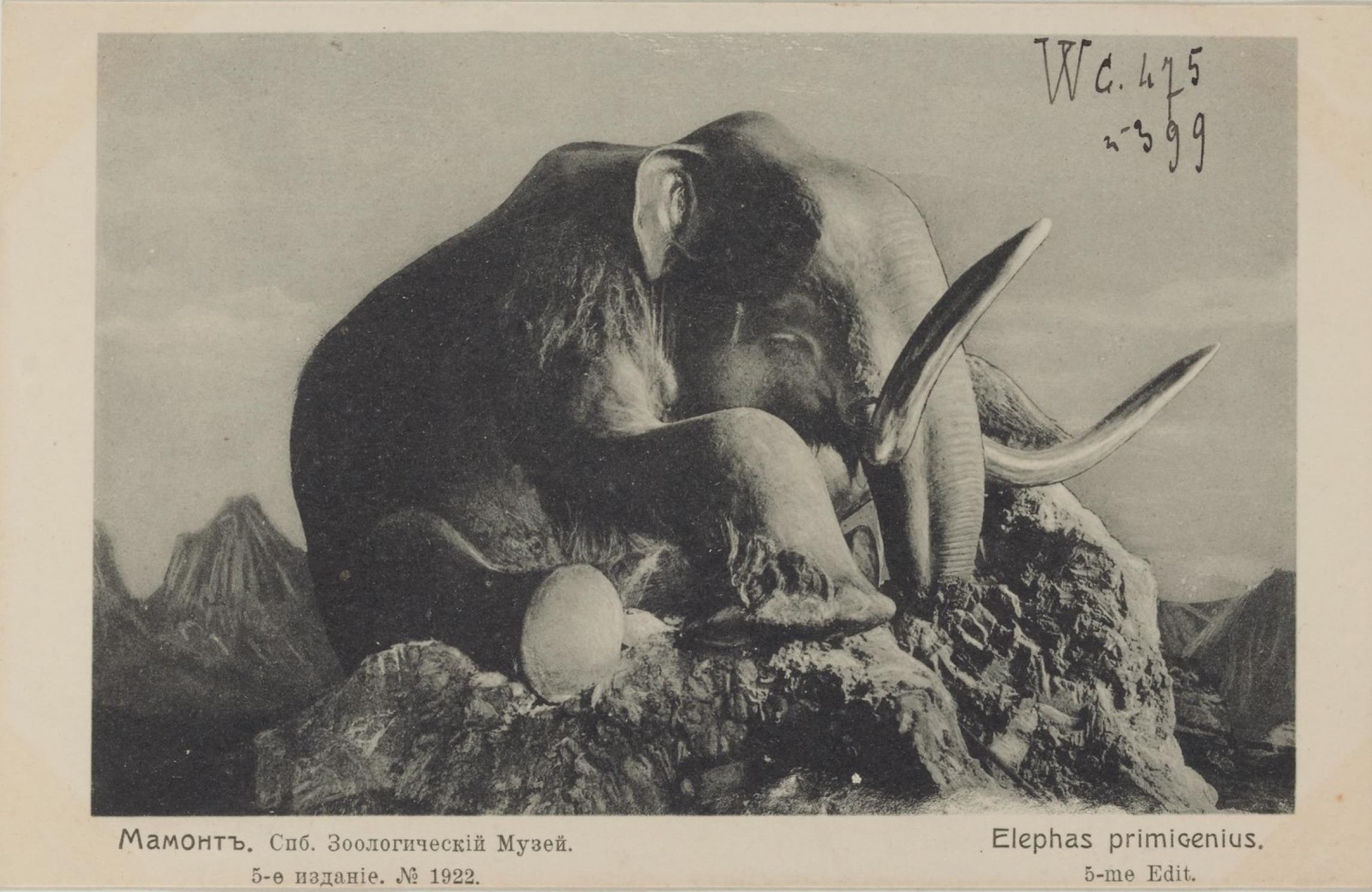 Академия Наук. Зоологический музей. Мамонт