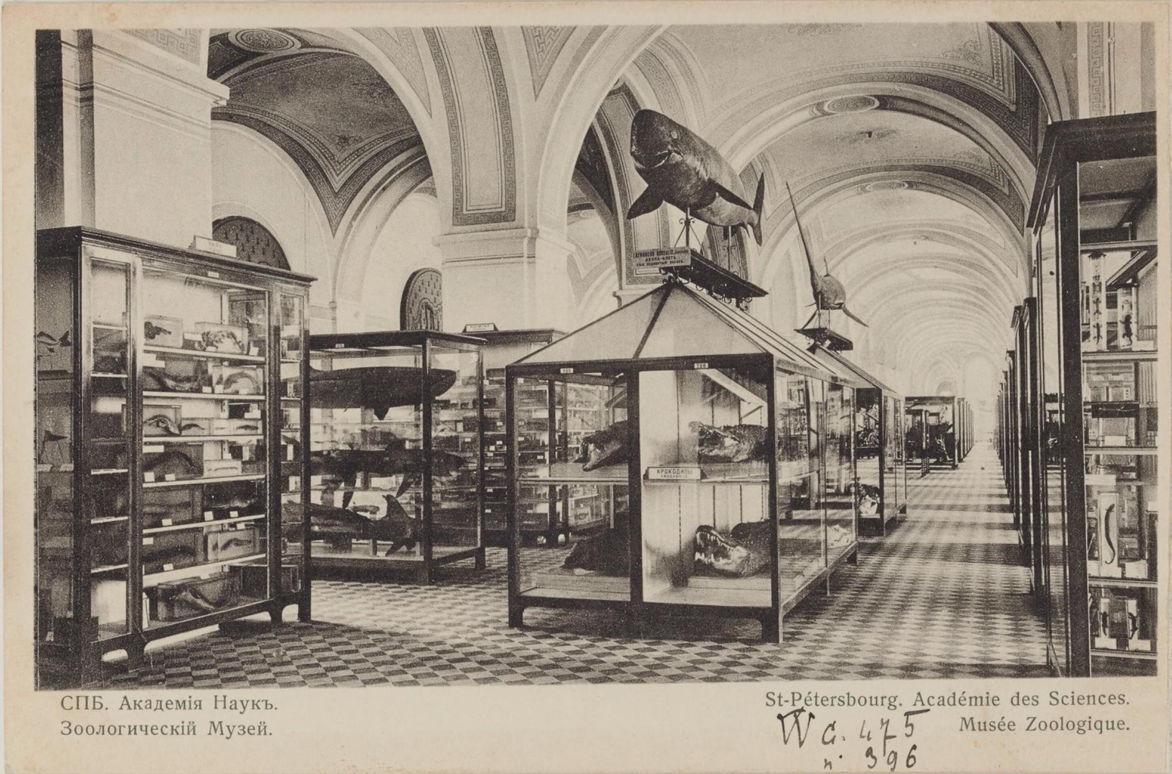 Академия Наук. Зоологический музей