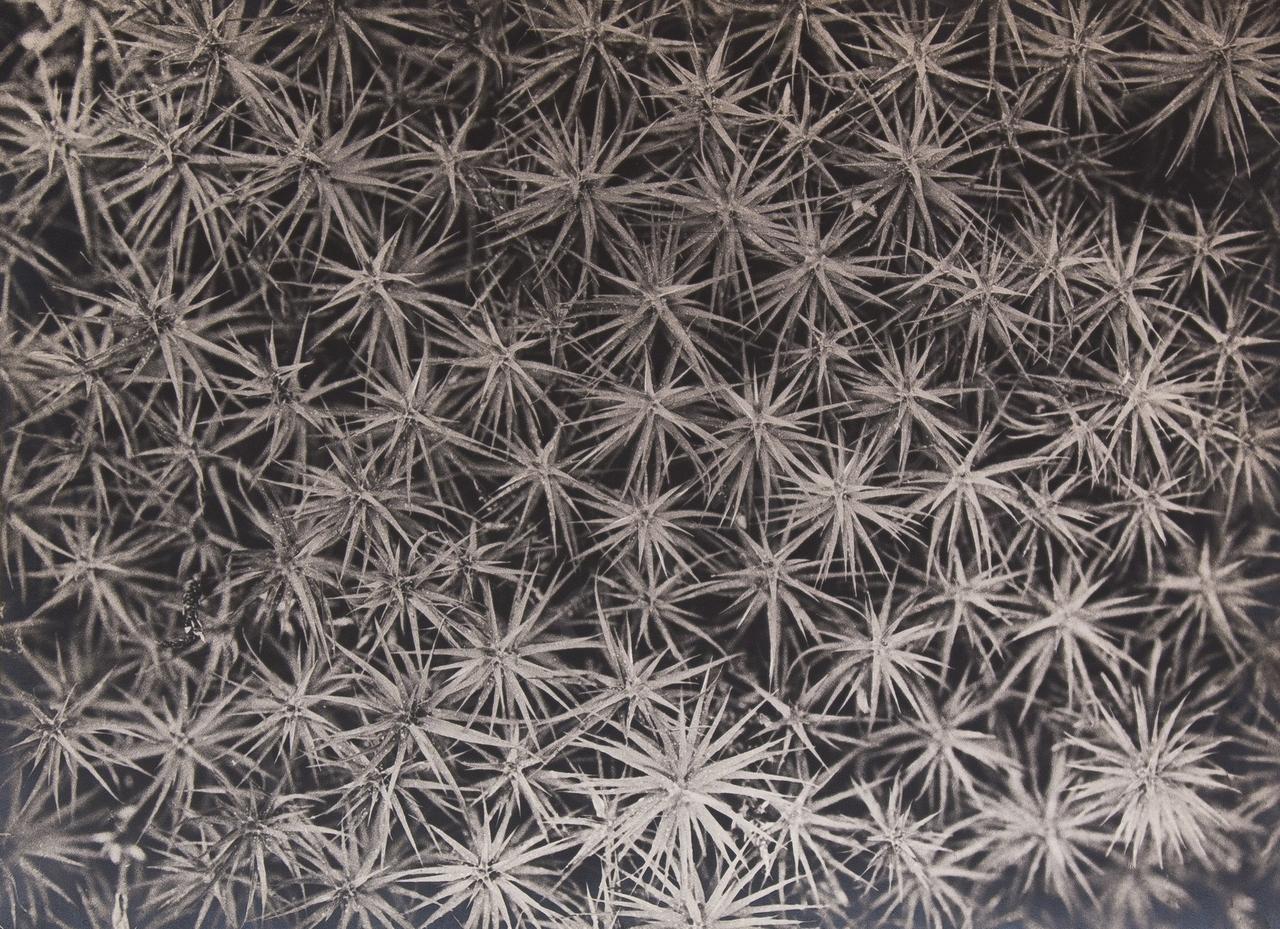 1950-е. Виноградов З.З. «Мозаика кукушкина льна»