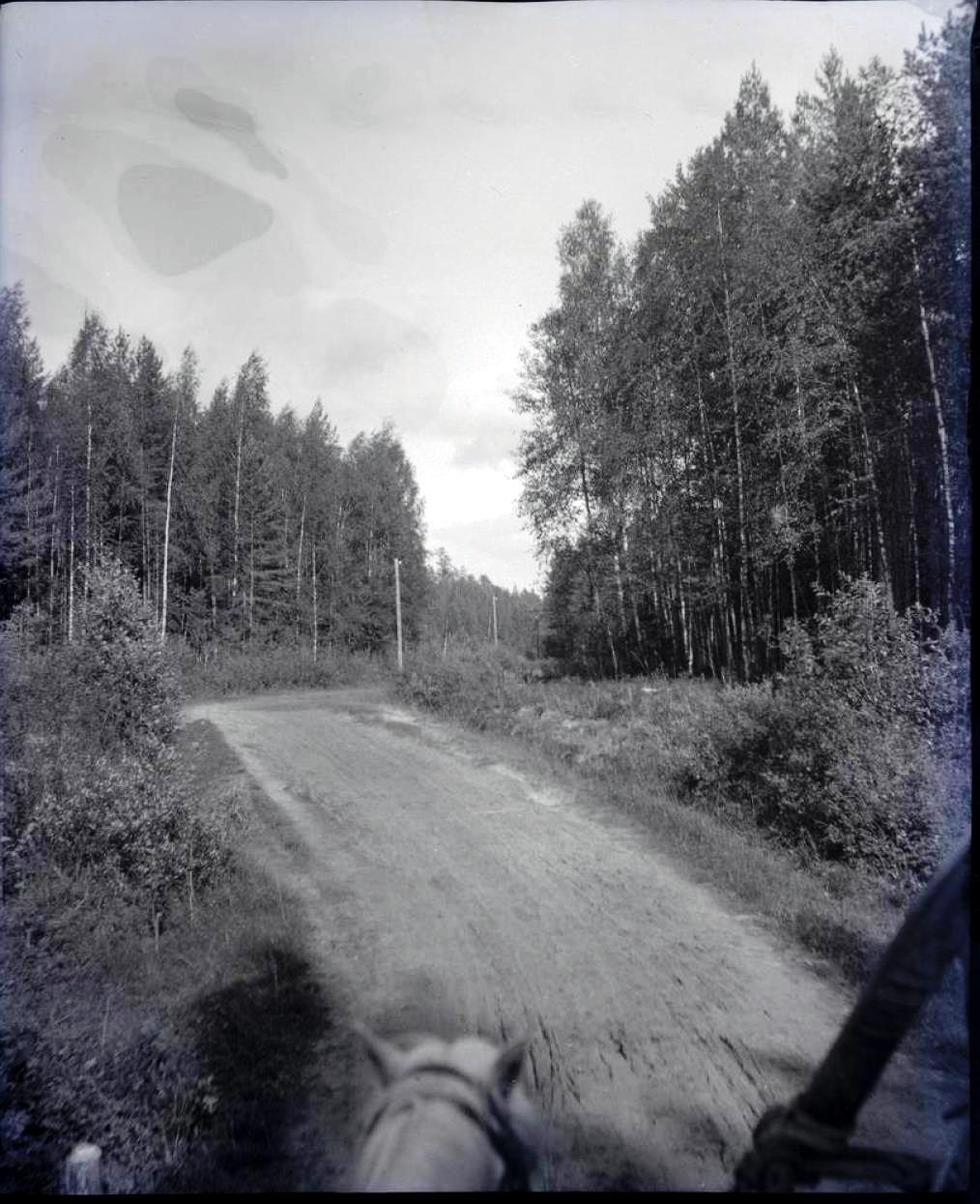 07. Лес между второй и третьей станциями, на правом берегу реки
