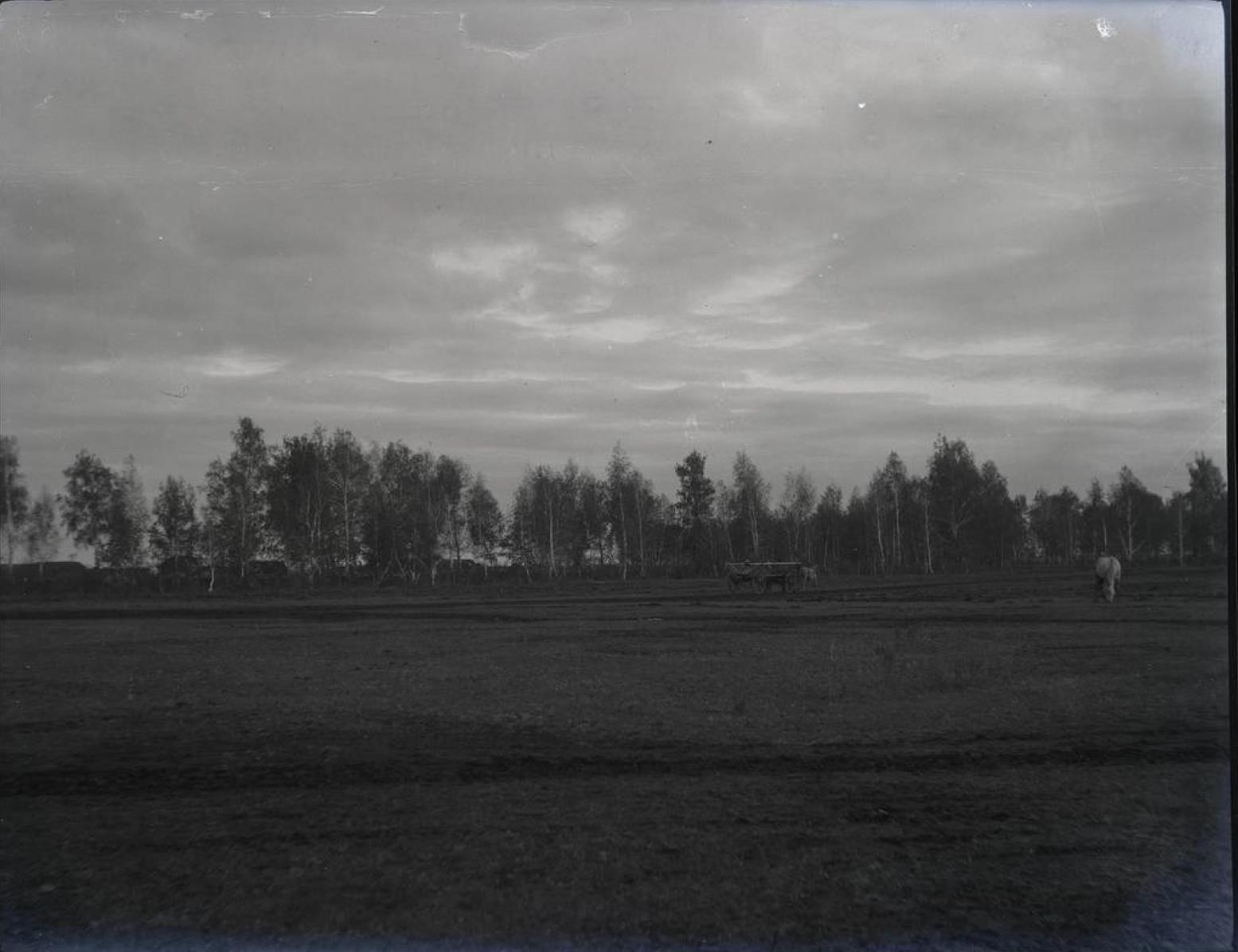 34. Киргизская степь. Березовая роща утром