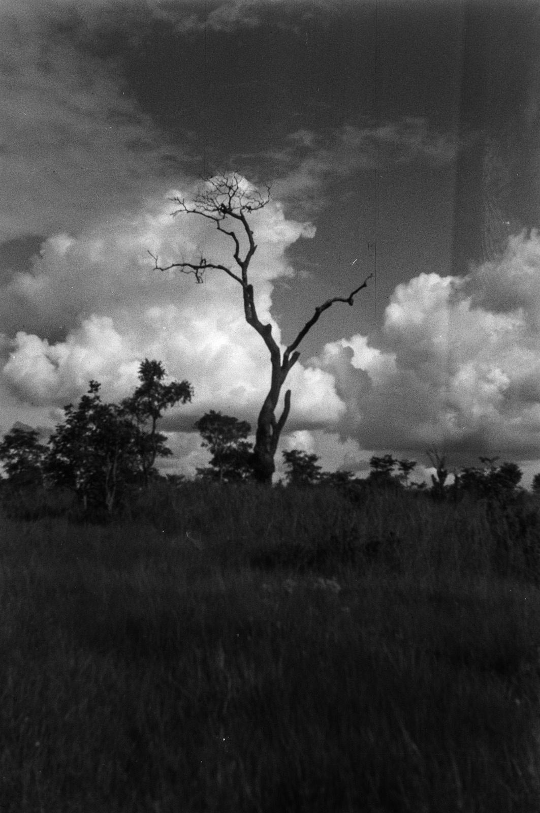 Между Капири Мпоши и рекой Лунсемфва. Доминируют в пейзаже высохшие останки огромного дерева
