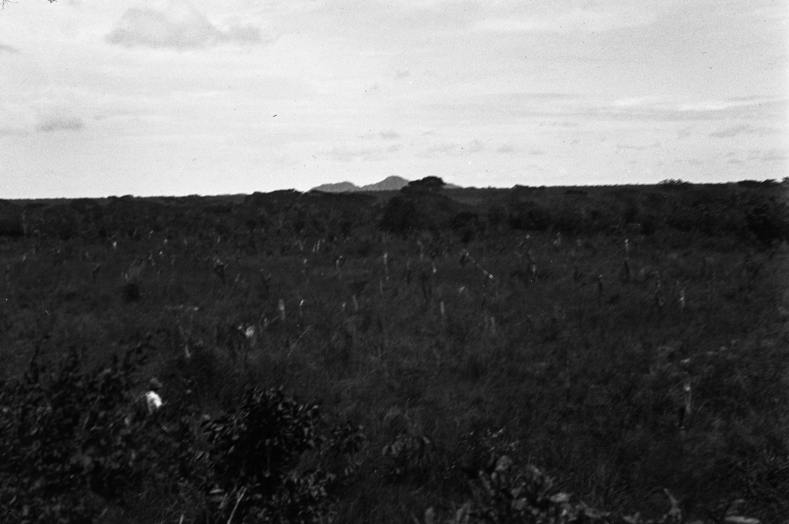 Между Капири Мпоши и рекой Лунсемфва. Заброшенное очищенное поле