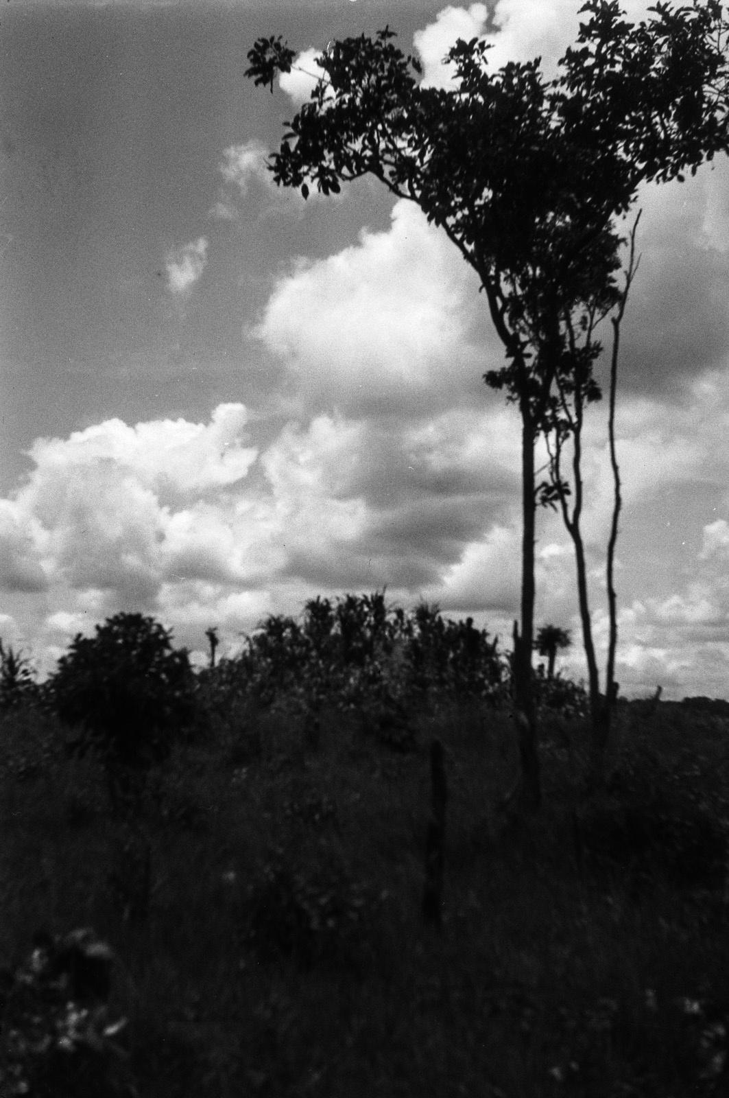 Между Капири Мпоши и рекой Лунсемфва. Заросший термитовый курган на краю поляны.