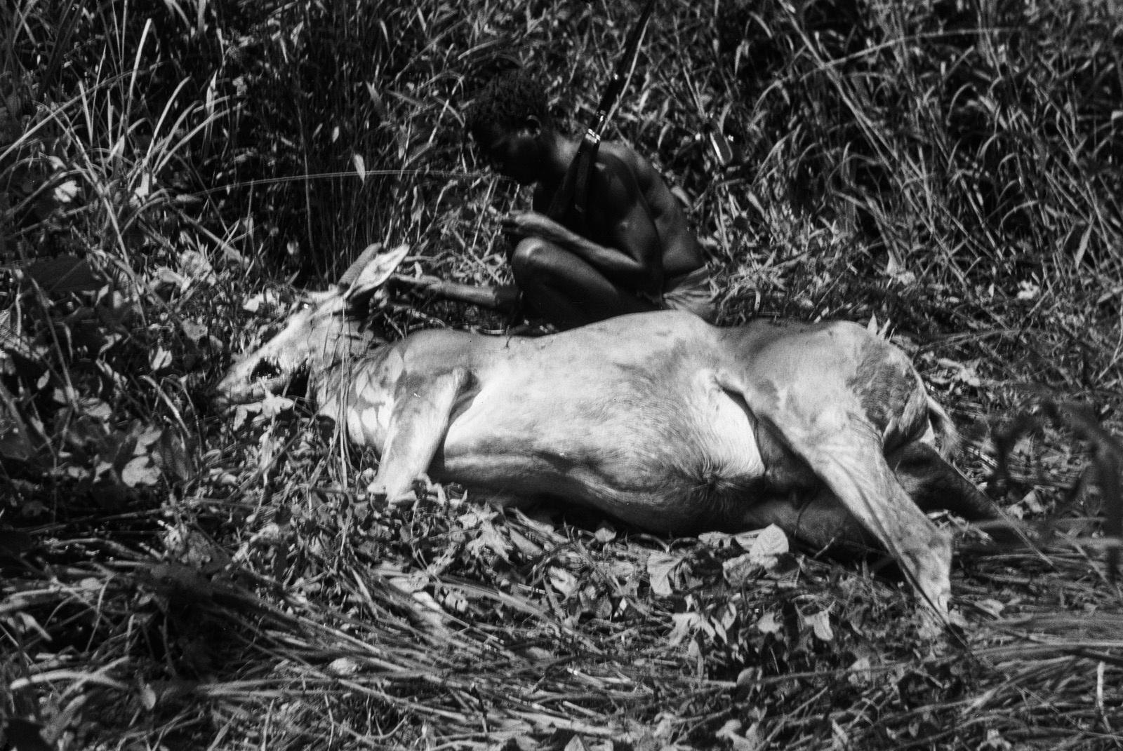 Между Капири Мпоши и рекой Лунсемфва. Убитая антилопа канна
