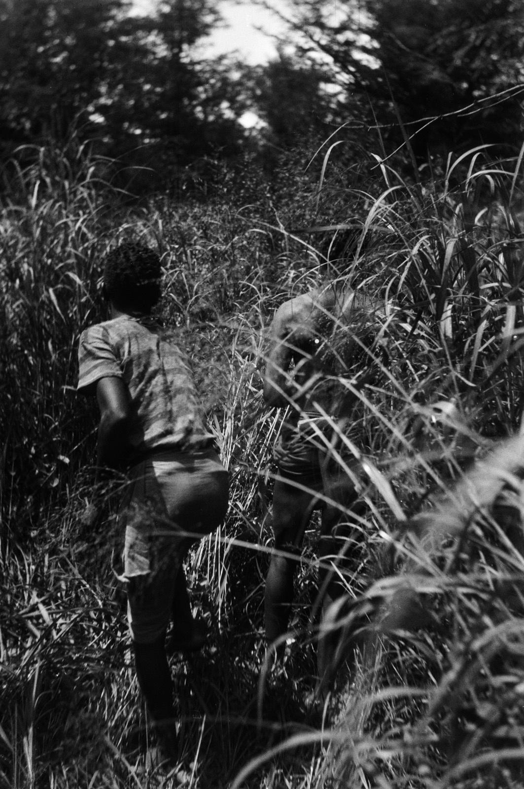 Между Капири Мпоши и рекой Лунсемфва. Юноша в зарослях тростника вдоль дороги