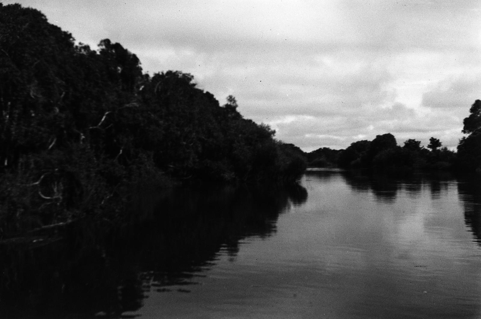 Вид на реку Кафу и ее прибрежную растительность