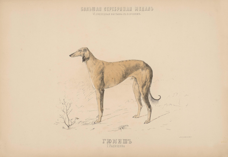 12. Портреты собак борзые