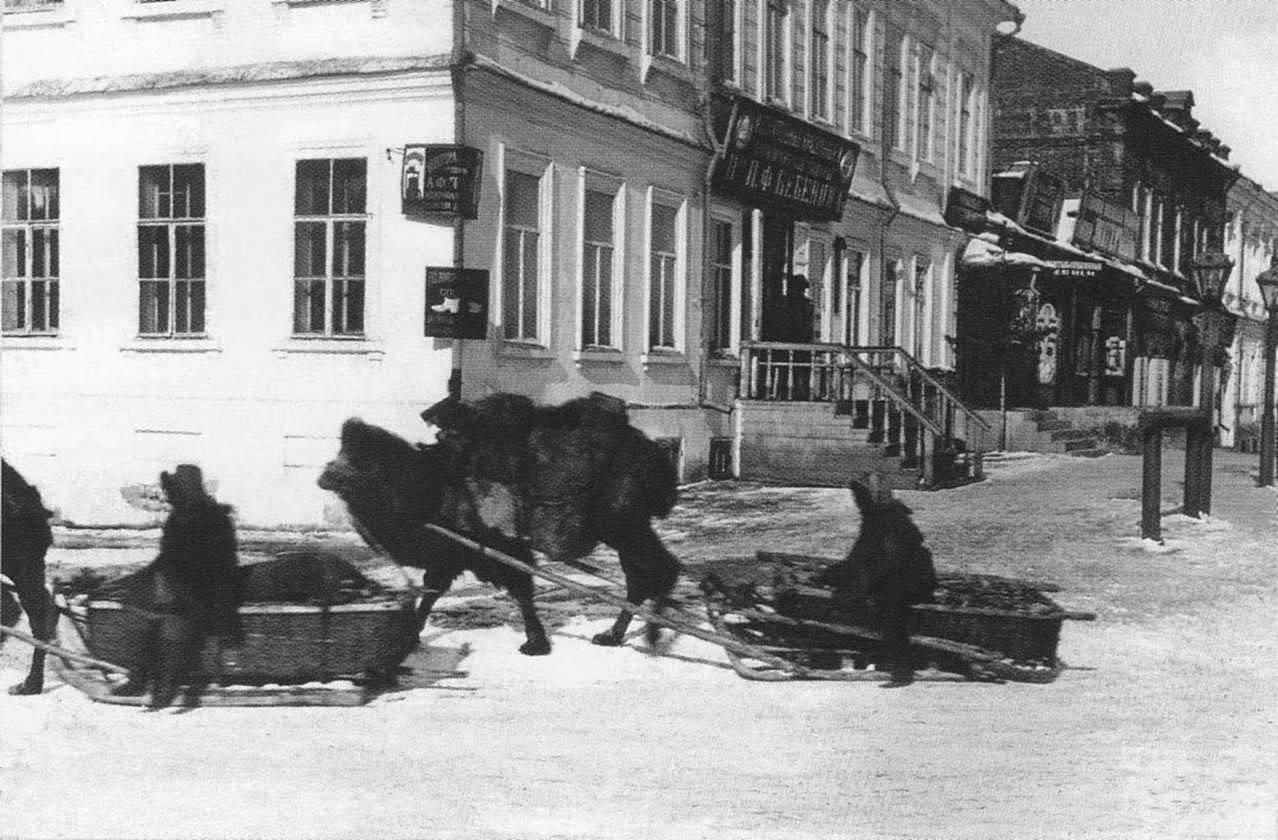 Обоз верблюдов в центре Омска