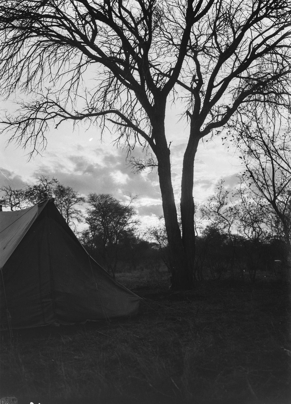 Бечуаналенд. Лагерь экспедиции