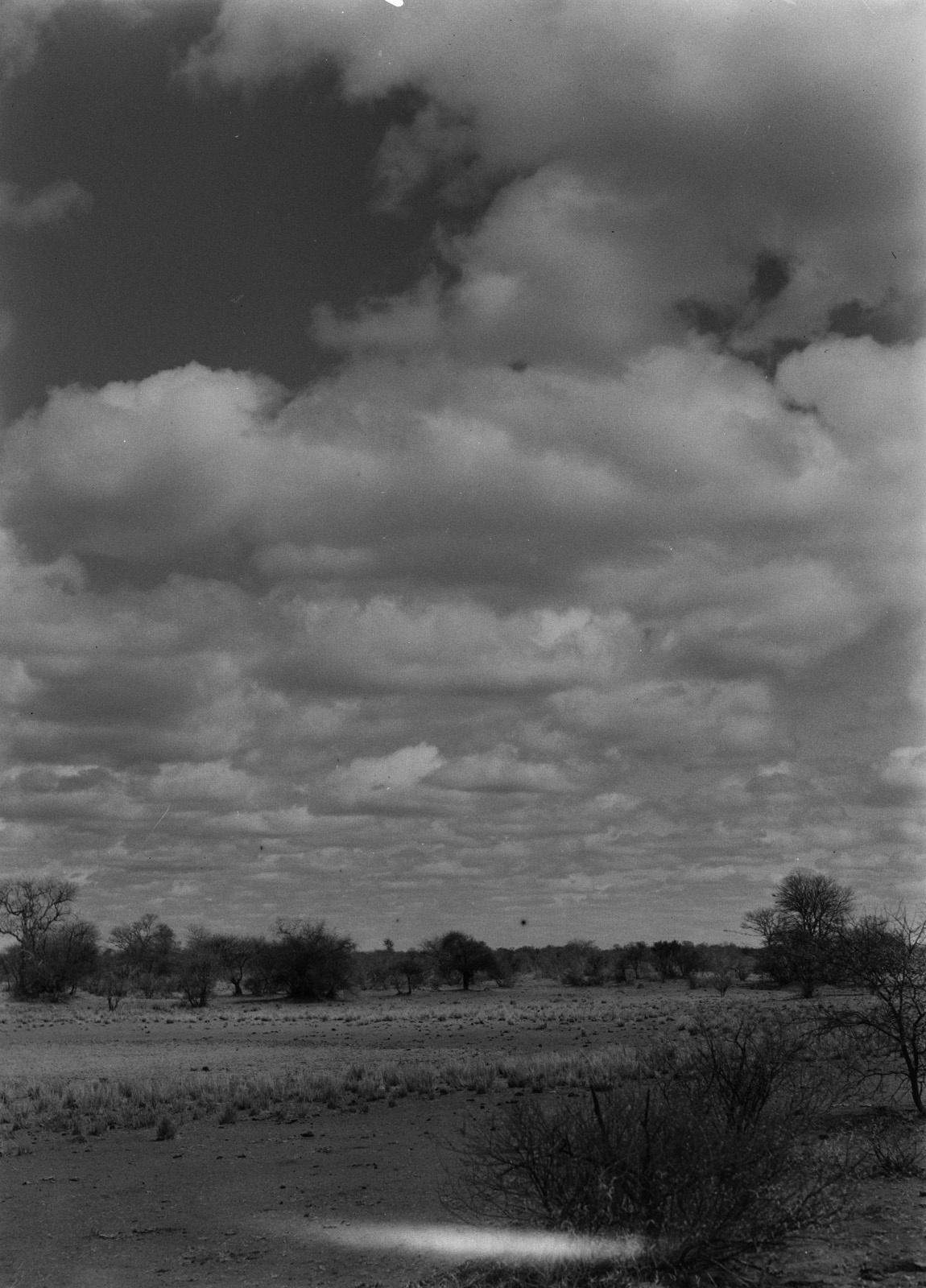 Бечуаналенд. Ранчо крупного рогатого скота на западном берегу Лимпопо