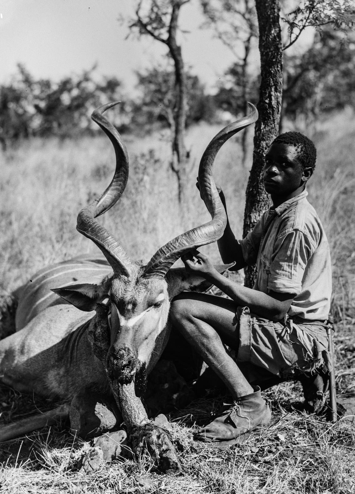 Бечуаналенд. Убитая антилопа куду и местный житель