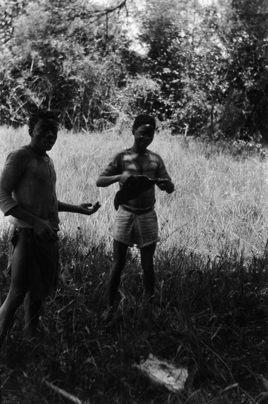 Н'Чанга. Два кальвеноса едят мед в тени дерева возле ручья