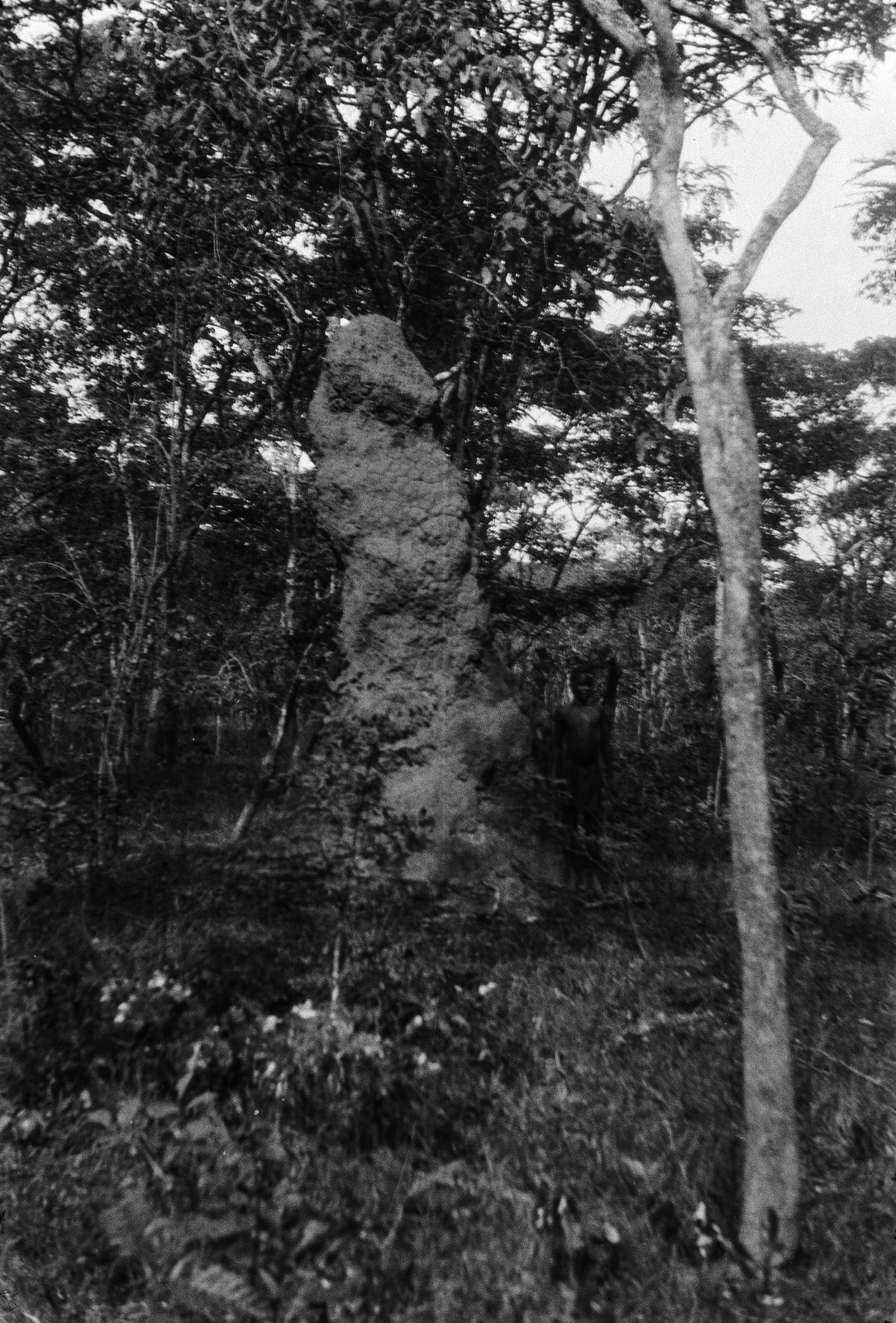Н'Чанга. Термитник в лесу