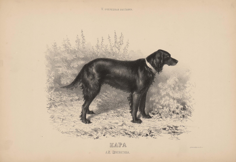 04. Портреты собак Подружейные